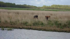 Experience beautiful nature and animals on holiday tours the Netherlands